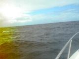 кит проплыл очень рядом с катером :-)